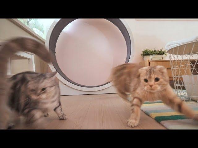 고양이에게 캣휠을 사줬는데 공포 분위기 되어버렸어요