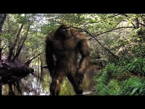 Sasquatch: The Government Coverup Explained.