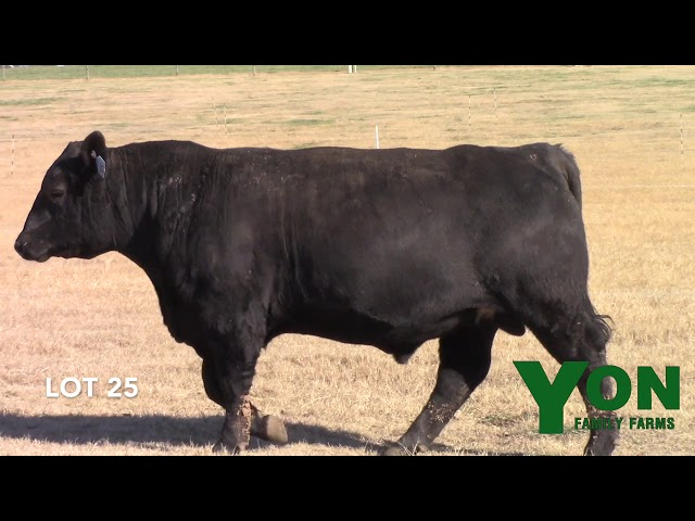 Yon Family Farms Lot 25