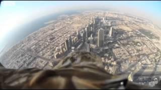 Darshan The Eagle Conquers The Burj Khalifa Skyscraper!