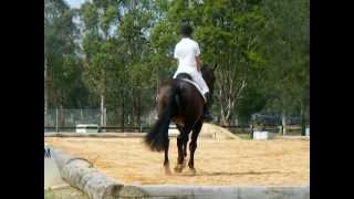 The Belstone Fox at Dressage NSW