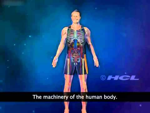 The Organ Systems of the Human Body
