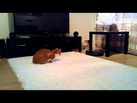 Cat's reaction to robot vacuum cleaner