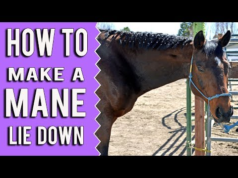 How To Train Your Horses Mane To Lie On One Side