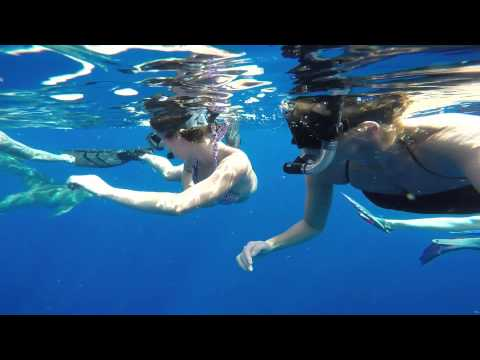 Swimming with Sharks Jupiter, FL #Sharks #swimmingwithsharks #GoPro