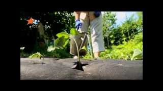 видео Разновидности огурцов для выращивания на даче.