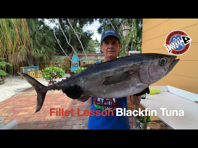 How to Fillet Blackfin Tuna