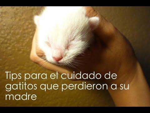 Como cuidar gatitos recién nacidos
