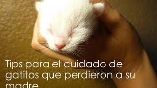 Guía para cuidar gatitos bebés