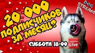 DOGSTREAM: 20.000 ПОДПИСЧИКОВ ЗА МЕСЯЦ! КАПЕЕЕЦ!!! Говорящая собака