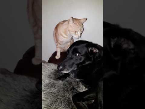 Dog Vs Cat 🐶🐱 ..