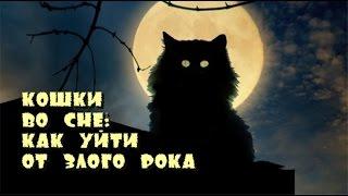 видео Белая кошка во сне