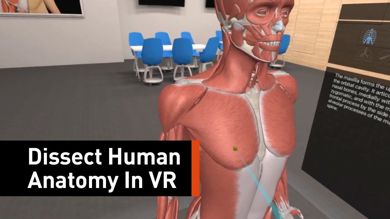 The First Fully Featured Vr Anatomy App Is On The Market Youtube