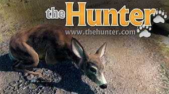Free To Play #1 - The Hunter