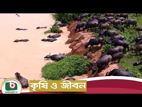 Krishi O Jibon EP-38 | Bangladesh Livestock Research Institute | Agriculture Development Program