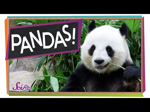 The Problem With Pandas