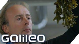 Algen: Alles Wissenswert rund um das Super-Food | Galileo | ProSieben