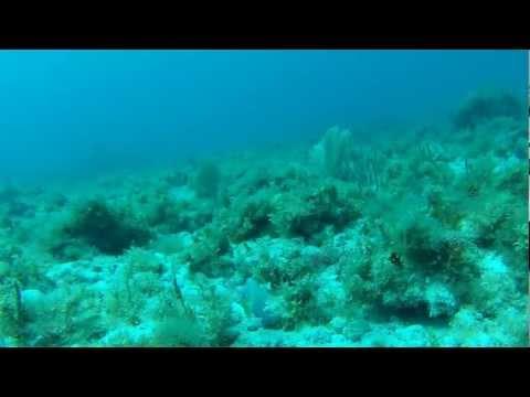 scuba diving- gulf of Mexico