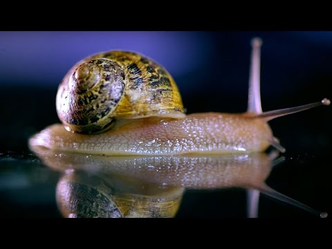 What Sound Does A Snail Make? - Bang Goes The Theory - Brit Lab - BBC