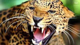7 Increíbles Ataques De Animales Captados En Cámara