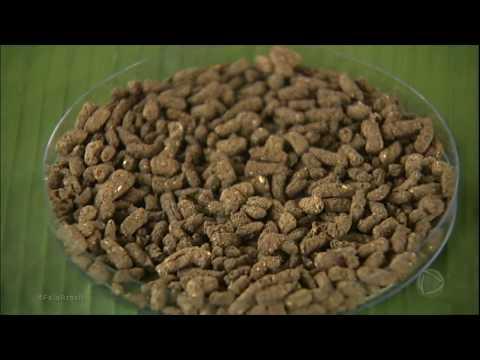 Ração de bananeira ajuda na criação do tambaqui