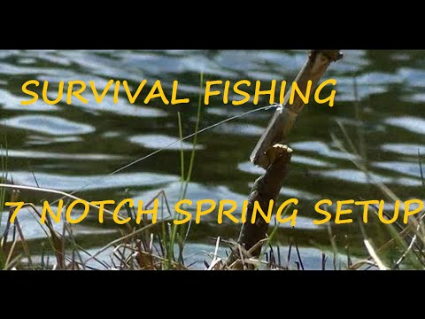 fishing has been responsible for the survival The fishing cat now has a species survival plan ssp how rare is this cat the international species information service lists 256 worldwide, with 68 being in the us.