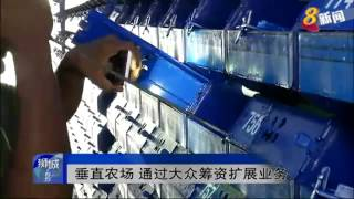 RBI Holdings mudcrab investment featured on Channel 8 (Chinese) Singapore Media