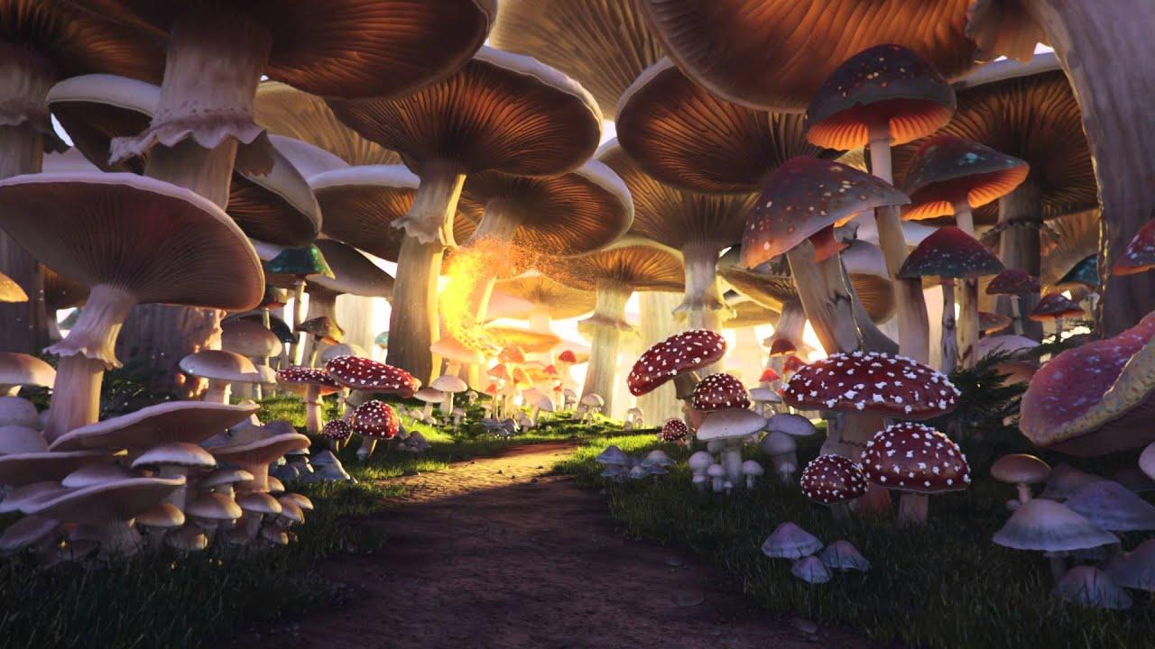Mushroom Forest Youtube