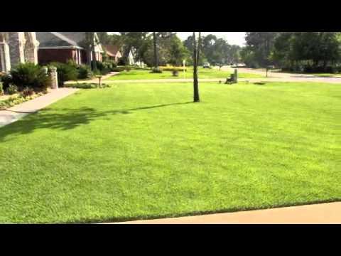 EMPIRE Sod / Turf / Grass from Big Earth Landscape Supply in Tampa, Sarasota, Palmetto, Bradenton
