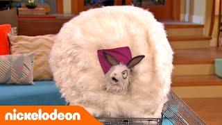 Los Thunderman | ¡A Cubierto! 💨 | España | Nickelodeon en Español thumbnail