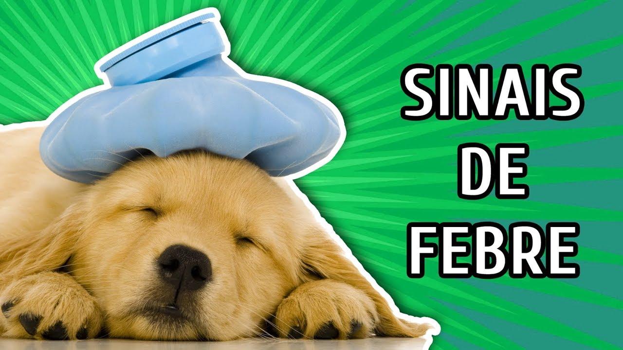 3 Sinais Que Seu Cachorro Está Com Febre