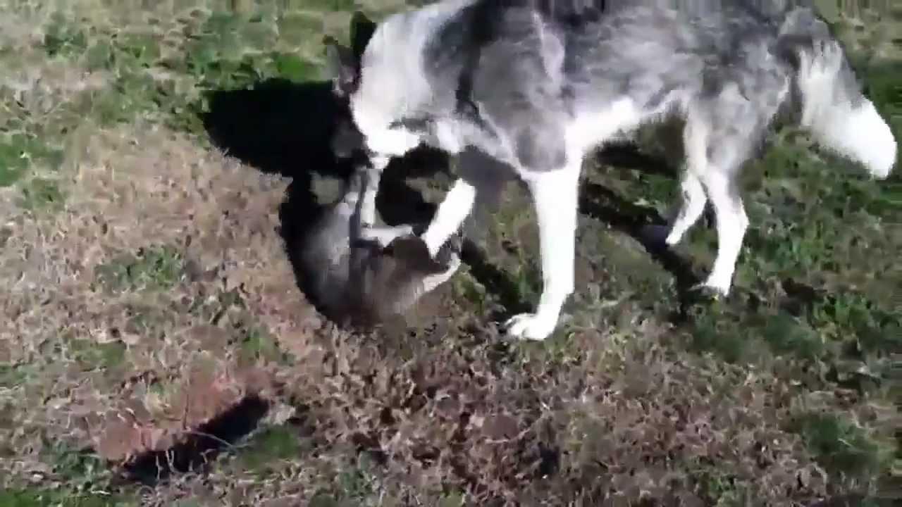 Horse Eats Cat