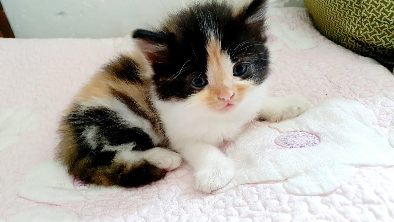 Cara Merawat Kucing Umur 1 Bulan Tanpa Induk Via Channel Youtube