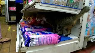 Funny Cat Frightens Little Girl