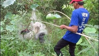 Amazing Fish Trap By Baby Duck - Net Fishing In The River - Cast Net Fishing In Cambodia