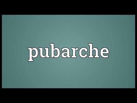 Pubarche Meaning
