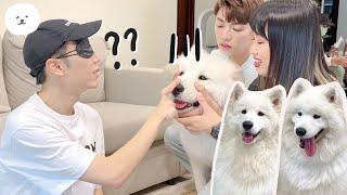 【南瓜PUMPKIN】『盲測薩摩耶』三隻長一樣的狗狗主人'摸'的出來嗎(薩摩耶Samoyed)