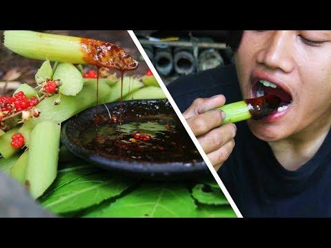 Survival Skills | Makan Rujak Batang Tembilung (Tembilungan), Tanaman liar di hutan. ASMR