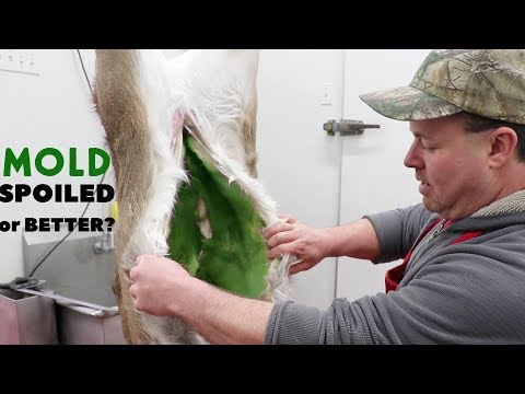 BUTCHER EXPLAINS AGING MEAT VS ROTTEN MEAT - How Do You Age Meat Safely?