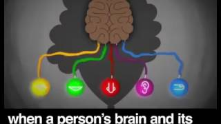 Animated Explanation of Autism