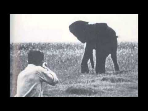rhetorical strategy in shooting an elephant by george orwell Rhetorical analysis on shooting an elephant essays: george orwell, shooting an elephant when an incident occurs the officer is summoned to regulate.