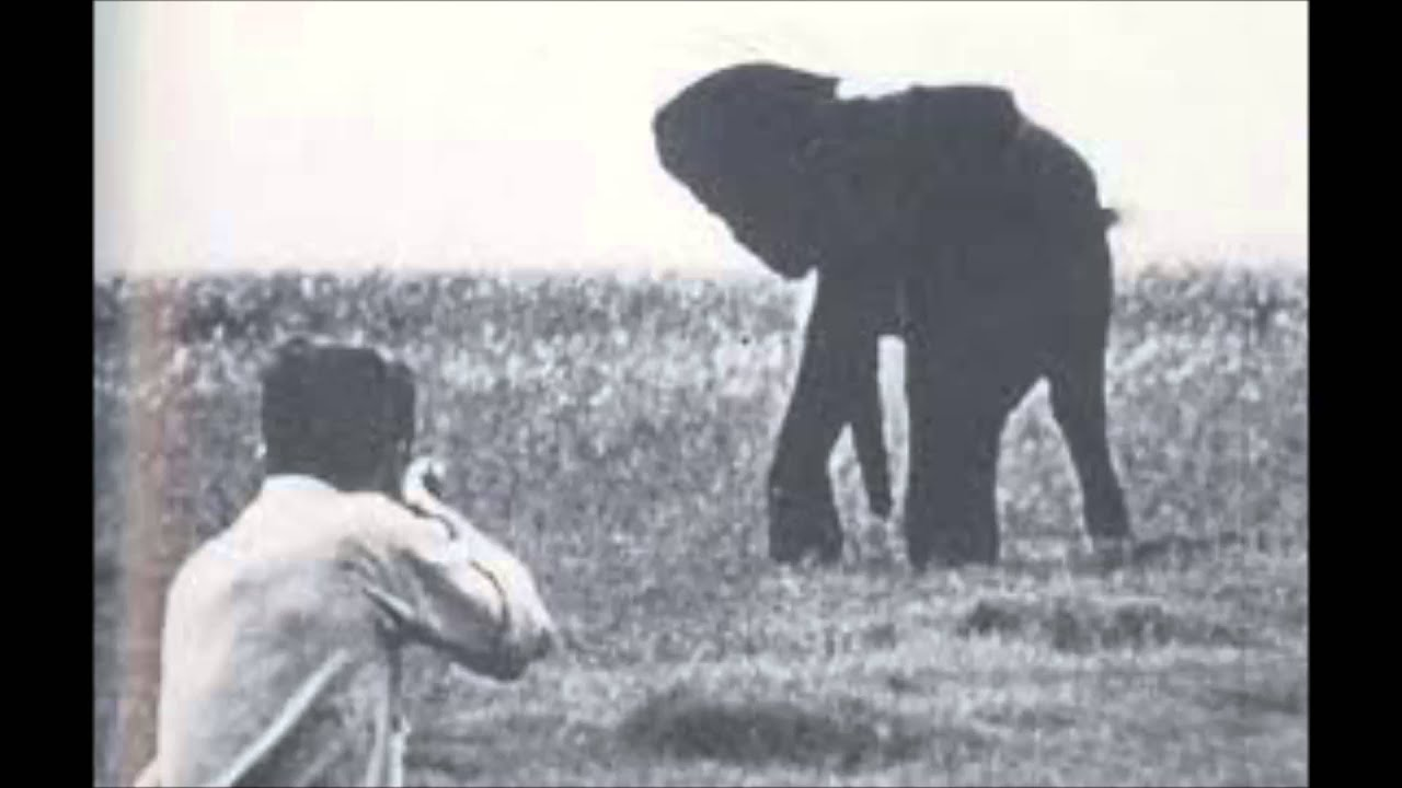 George orwell essay shooting an elephant