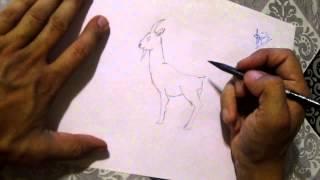 как рисовать козла1