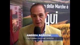 Andrea Bordoni, Funzionario Regione Marche
