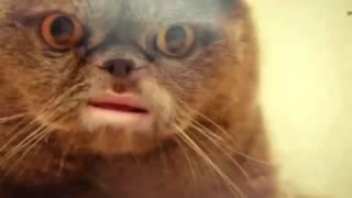 Кот Сальвадор remix (by ТК)(Пробное видео., 2012-08-28T20:33:00.000Z)