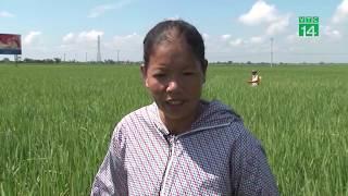Nông dân phun thuốc trừ sâu như tắm cho cây trồng | VTC14