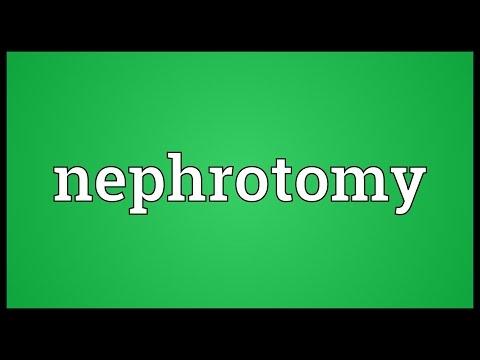 Header of nephrotomy