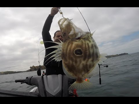 Chasing Kingfish With Livies, Big John Dory And Happy New Year