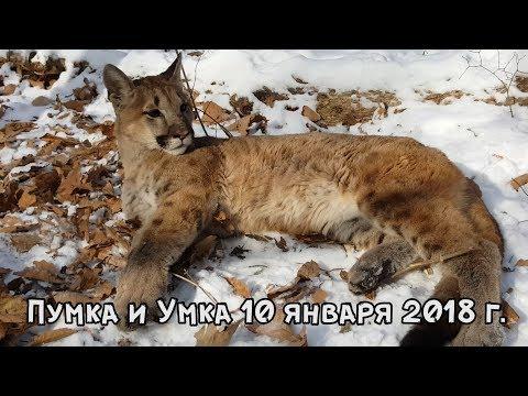 Пумка и Умка 10 января 2018 г.