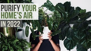 TOP 10 Air Purifying Plants You Need